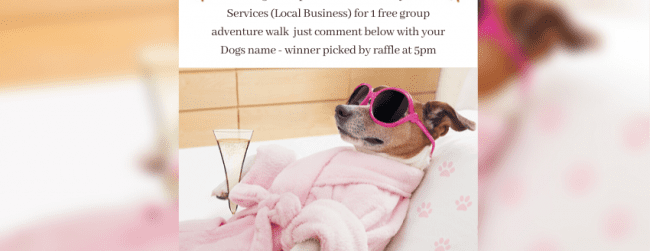 Dog Friendly Ireland Day – Competition!!
